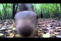 Животные / Видео