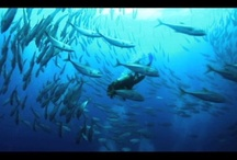 Underwater Cinematography / Beautiful images of the underwater world - both still photography and dynamic videos!