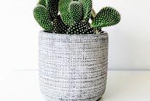 Pots&Plants / Green fingers.