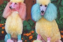 Oodles of Poodles / by Jackie Taylor