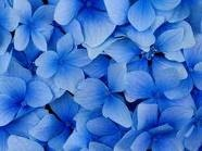 For the LOVE of BLUE!!  / All things BEAUTIFULLY BLUE!! / by Barbara Hainsworth