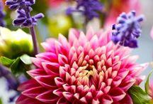 꽃 과 나비*식물