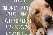 Dogs / Cute