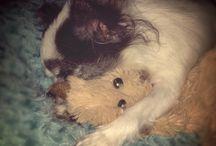 Birby Love / My little dog Birba