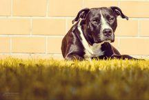 Dog photography / My own portfolio - Karolina Balogová the photographer :)