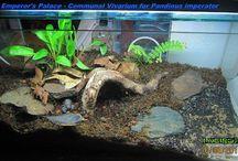 Scorpion terrarium
