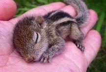 Squirrel * Eichhörnchen * Oachkatzl