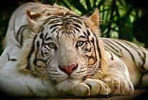 Mundo animal / Con el sol sobre la espalda vió su sombra delante y la bestia supo entonces que ya era tiempo de descansar