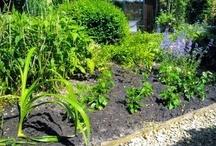 garden / just put them in