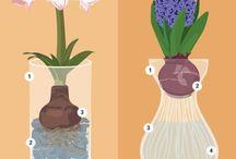 Bulbs flowers and advice