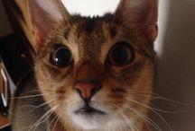 Buono the Cat