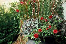 plants/flowers / by Jennifer Weers-Lankston