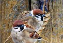 Птицы декупаж