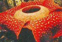 flora indonesia