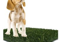 Artificial Grass / Synthetic Turf / Fake Grass Puppy Pads, Pet Potty, Door Step, Display / Premium Artificial Grass
