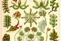 Ernst Haeckel Inspiration Draws