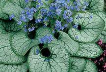 Rostliny - mám