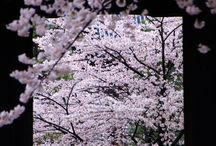 四季の華『春』