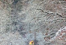 Winter, better seen than lived / by Barbara Scott