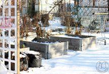 Oravankesäpesä | talvella