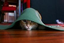 Cute Critters / by Anna Winterhalter