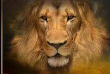 Juudan Leijona