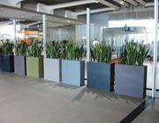 Pot plant ideas
