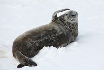 Antarctica / Discover the Wildlife Wonders of the World's Last Best Wilderness  http://bit.ly/1eC5V6m