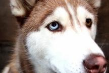 dogs :) / by Jennifer Roan