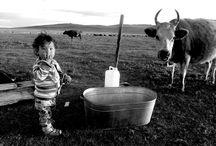 Voyage en Mongolie / Les plus belles photos de voyage en Mongolie