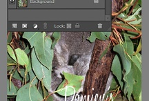 Photoshop Help / by Amber Lynn
