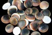 Shells - Cat's Eye