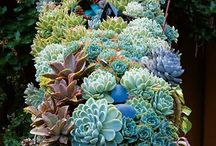 Garden Succulents / by Nancy Stevens