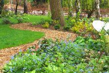 Backyard / Backyard, frontyard, garden, playground etc.