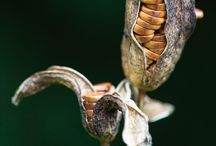 Paper and inspiring seed pods