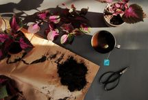 Lila blomma palettblomma