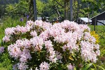 St. Ann's Garden