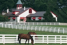 Thoroughbreds / by Mary Bellino