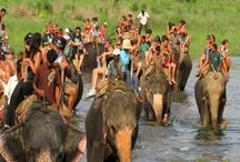 Royal Chitwan National Park / Read traveler reviews for Royal Chitwan National Park Tulsipur, Royal Chitwan National Park timings, Royal Chitwan National Park address, hotels near Royal Chitwan National Park, travel packages, recommendations and photos. To know more pls log on to http://www.justorbit.com/asia/nepal/tulsipur-69154/royal-chitwan-national-park-27364.html