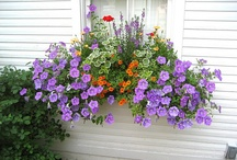 WINDOWS FLOWER BOXES