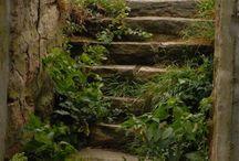 Dream Garden / Ideas for a secret bosque
