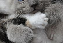 To cute / Cats