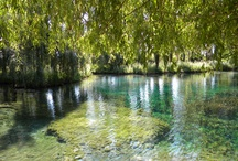 Acqua, flora e fauna