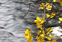 pointe de couleur jaune