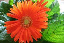 Flower Power / by Susan Steadman