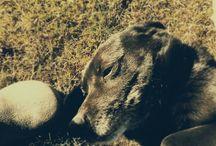 dogs :*love