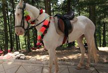 Le Baloutche / Le Baloutche (nommé aussi Baluchi) est originaire de la région du Baluchistan au Pakistan les provinces Sind ou Bahawalpr. Il est le résultat de croisements entre des chevaux Barbes et des chevaux Beledougou et partage les origines des chevaux Waziri.