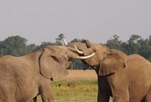 Africa 2013 / Safari fotografico en Kenya y Tanzania.