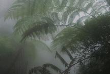 palmy/roślinki