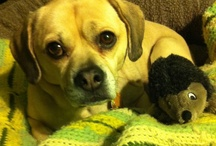 Mac The Puggle / Follow me on Twitter at @macthepuggle. Woof!